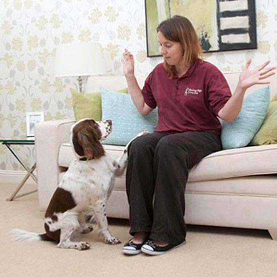 Hearing Dogs For Deaf People The Goodwill Partnership
