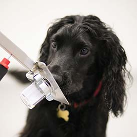 Medical-Detection-Dogs_1