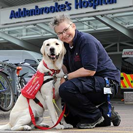 Medical-Detection-Dogs_2