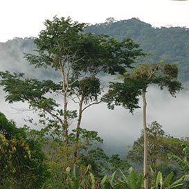 Rainforest-Foundation_2