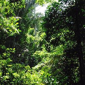 Rainforest-Foundation_4