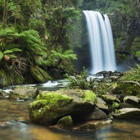 Rainforest-Foundation_5a